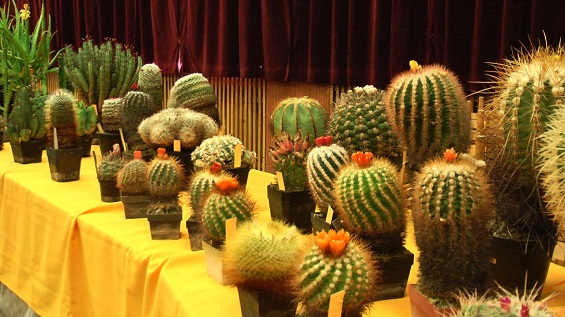 kaktusy2019-poster